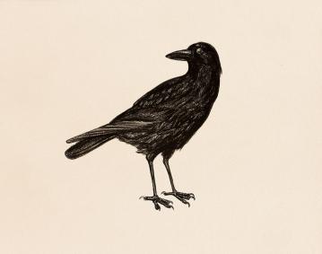 """#48 Birds"" (2013) Dibujo, lápiz y pastel sobre papel. Medidas 28 x 35,5 cm. Film: The Birds (1963) Dir. Alfred Hitchcock."