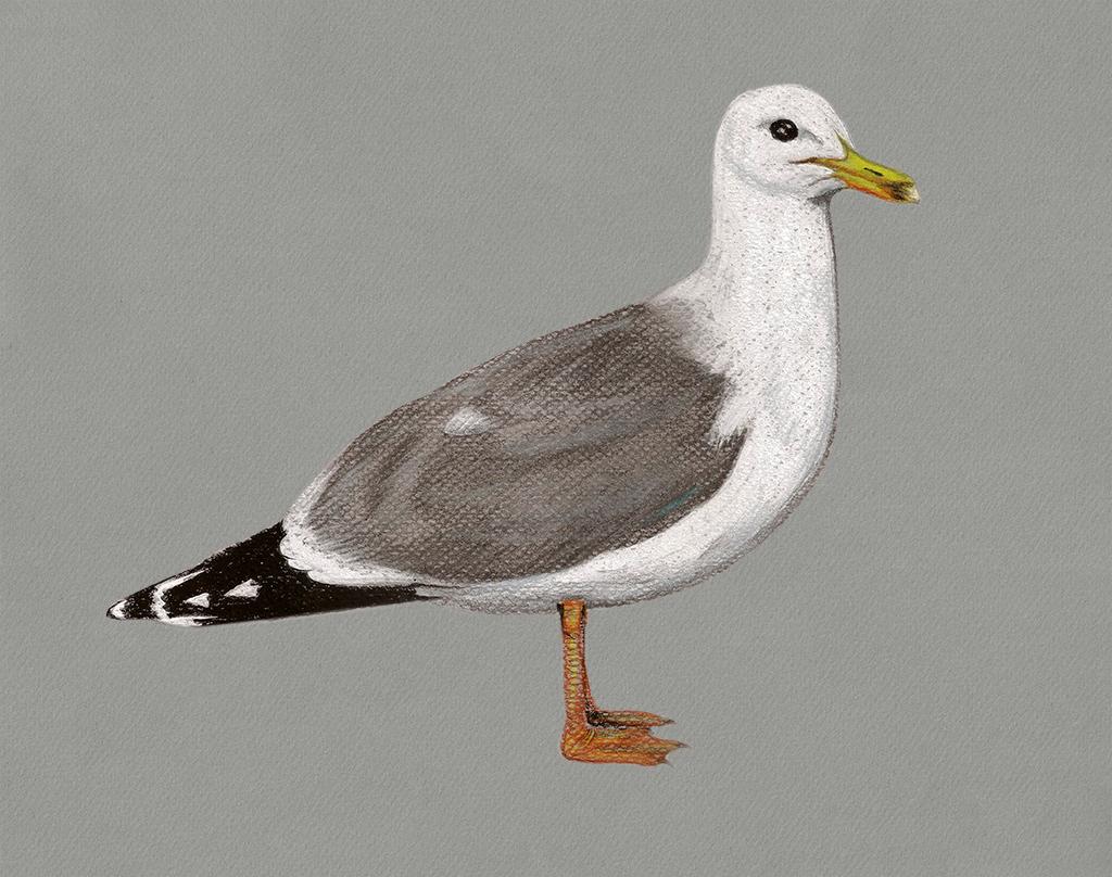 Birds#48b