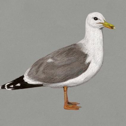 """#48b Birds"" (2013) Dibujo, lápiz y pastel sobre papel. Medidas 30 x 35,5 cm. Film: The Birds (1963) Dir. Alfred Hitchcock."